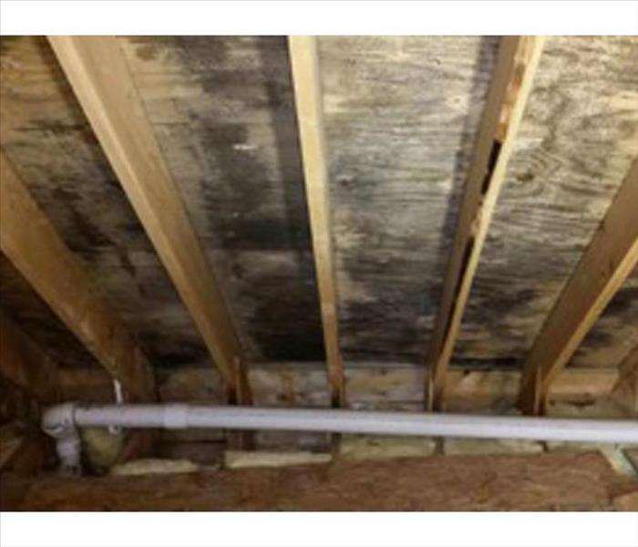 Mold Growth in a Miramar Beach Attic Before
