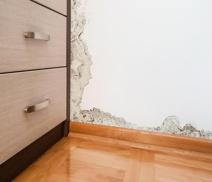 Mold Remediation Why Mold Growth In Your Miramar Beach Home Is A Serious Problem