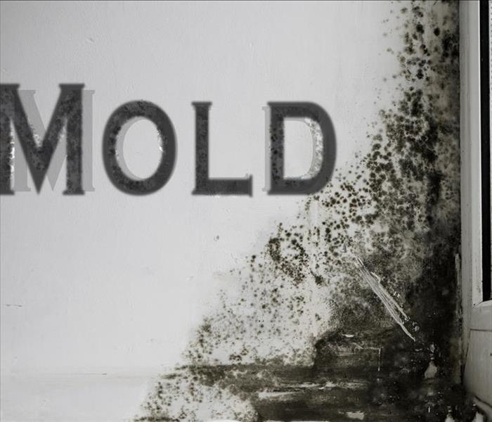 Mold Remediation Eliminating Odors after Mold Damage in Miramar Beach