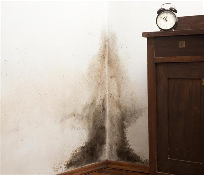 Mold Remediation Mold and Mildew