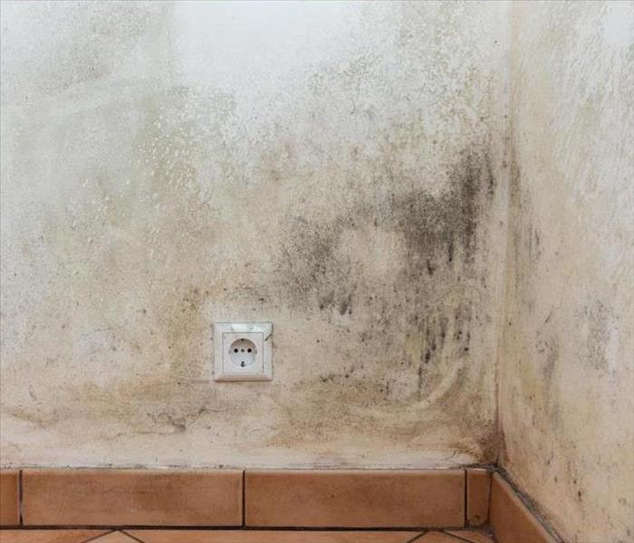 Mold Remediation How to Help Prevent Health Effects from Mold Damage in Santa Rosa Beach