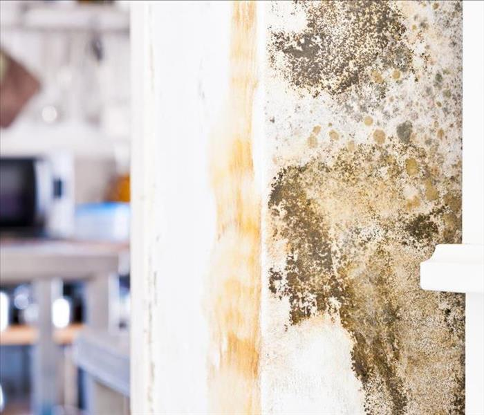 Mold Remediation Air Conditioning And the Complicated Relationship With Mold in a Santa Rosa Beach Property