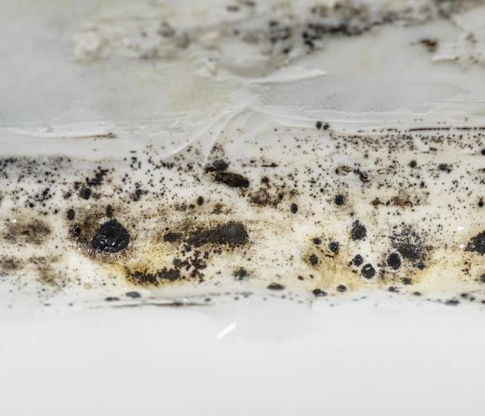Commercial Don't Overlook Mold in Your Miramar Beach Commercial Property
